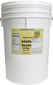 Alfalfa sprout seed in super pail