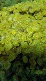 Golden Raisins (fresh)  - SPL026 - 15 lb. box