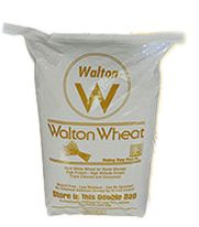 Natural hard white wheat in 50 lbs bag