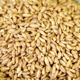 oat groats in a 25 lb. bag